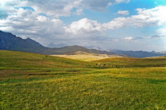 Asian landscape -  steppe, cattle and pamir mountains Royalty Free Stock Photos