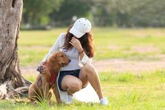Asian lifestyle woman playing with golden retriever friendship dog in sunrise outdoor royalty free stock images