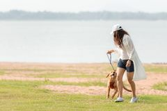 Asian lifestyle woman playing and running  with golden retriever friendship dog in sunrise outdoor royalty free stock images