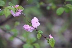Asian-like pink flowers stock photo