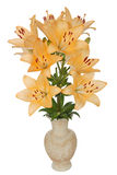 Asian lily flowers, lat. Asiatic Hybrids, in a ceramic vase Royalty Free Stock Photo