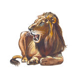 Asian lion Royalty Free Stock Photo