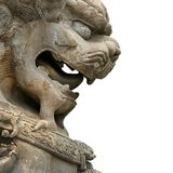 Asian lion background Royalty Free Stock Image