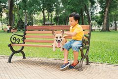 Asian little boy enjoying and playing with his dogs in park.  royalty free stock images