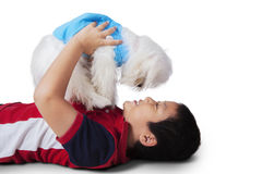 Asian little boy playing maltese dog. Portrait of happy little boy lying on the floor while playing a maltese dog in the studio, isolated on white background Stock Photo