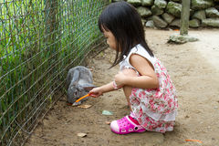 Asian Little Chinese Girl Feeding a Rabbit with Carrot Stock Images