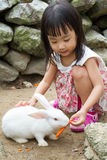 Asian Little Chinese Girl Feeding a Rabbit with Carrot Royalty Free Stock Image