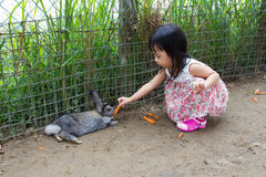 Asian Little Chinese Girl Feeding a Rabbit with Carrot Stock Photos