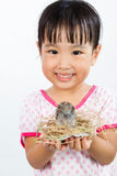 Asian Little Chinese Girl Holding Small Bird in hands Royalty Free Stock Photography