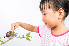 Asian Little Chinese Girl Petting a Small Cuckoo Royalty Free Stock Photo