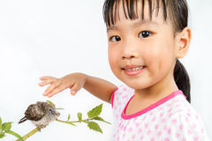 Asian Little Chinese Girl Petting a Small Cuckoo Stock Photo