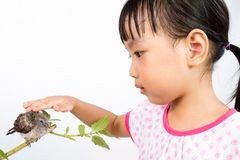 Asian Little Chinese Girl Petting a Small Cuckoo Royalty Free Stock Images