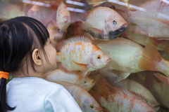 Asian Little Chinese Girl watching fish Stock Images