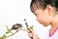 Asian Little Chinese Girl Watching a Small Cuckoo Royalty Free Stock Photography