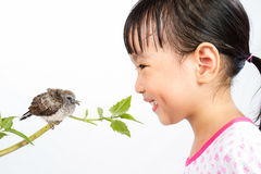 Asian Little Chinese Girl Watching a Small Cuckoo Stock Photos