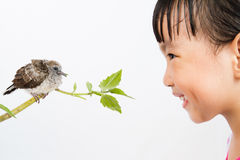 Asian Little Chinese Girl Watching a Small Cuckoo Stock Images