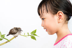 Asian Little Chinese Girl Watching a Small Cuckoo Stock Photography