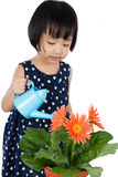 Asian Little Chinese Girl Watering Flower Royalty Free Stock Image