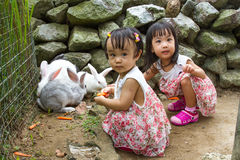 Asian Little Chinese Girls Feeding Rabbit with Carrot. In the Farm stock image