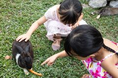 Asian Little Chinese Sisters Feeding a Rabbit with Carrot stock images