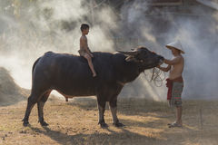 Asian local boy sitting on buffalo with father,countryside Thailand Royalty Free Stock Image
