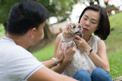 Asian lovely couple with shih tzu dog. Lovely asian couple with their pet shih tzu puppy at outdoor park royalty free stock photography