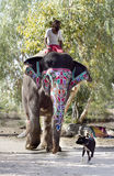 Asian Mahout Stock Images