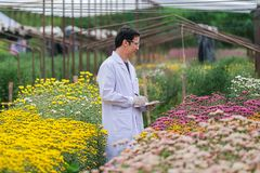 Asian male researchers and chrysanthemum data recording in garden. Asian male researchers and chrysanthemum data recording in the garden stock photo