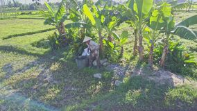 Asian Man with Basket Goes to Rest under Palm Tree. NHA TRANG, KHANH HOA/VIETNAM - JUNE 20 2017: Asian man in white traditional hat with basket goes to rest stock video