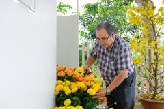 Asian man decorating Chinese New Year/Lunar New Year with blooming yellow flower in front of house royalty free stock photography