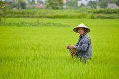 Asian man in rice field.