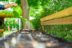 Asian man`s hand are watering the sapling in the plastic flowerpot in a row. Asian man`s hand are watering the sapling in  the plastic flowerpot in a row royalty free stock photo