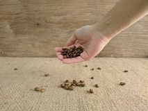 Asian man`s hands holding coffee beans. royalty free stock photography