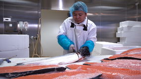 Asian man slicing a fillet of salmon at table on the fish factory. Dolly shot. stock footage