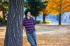 Asian Man Stands under a Ginkgo Tree Stock Photography