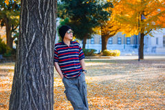 Asian Man Stands under a Yellow Ginkgo Tree in Autumn Royalty Free Stock Image