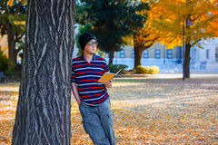 Asian Man Stands under a Yellow Ginkgo Tree in Autumn Royalty Free Stock Images