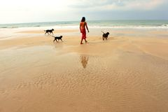 Asian man with three black dogs enjoy walking on the beach.  Stock Photography