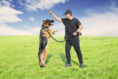 Asian man training his dog in the meadow. Picture of Asian man training his German Shepherd dog in the meadow stock photos
