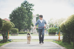 Asian man walking with a siberian husky don. In the park Royalty Free Stock Photography