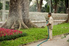 Asian man is watering red flowers with a hose in garden with a huge tree on background. stock photos