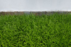 Asian manicured grasses grow along the base of the wall surround Royalty Free Stock Photography
