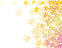 Asian maple leaves background Royalty Free Stock Image