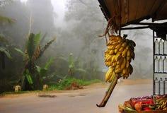 Asian market on palms background. A bunch of bananas and asian market on palms background in fog, Ella, Sri Lanka Royalty Free Stock Photo