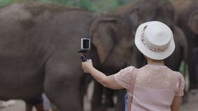 Asian middle aged woman tourist relaxing and take a photo with elephants in chiang Mai ,Thailand