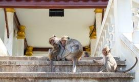 Asian monkey family Royalty Free Stock Images