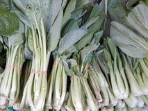 Asian mustard greens Stock Image