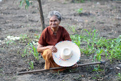 Asian old farmers in the vegetable garden. Stock Photography