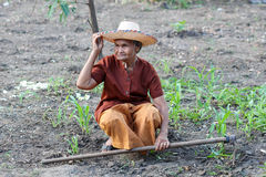 Asian old farmers in the vegetable garden Royalty Free Stock Photos