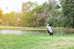 Asian openbill stock Royalty Free Stock Image